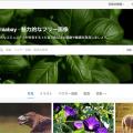 ブログで使えるアイキャッチ画像のおすすめサイトを探してみました