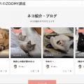【ZOOMY使い方講座】コンテンツビルダーでSNSサイトのトップページを作成